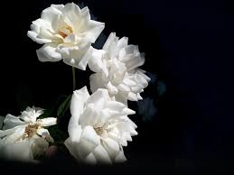 blog of spiritual knowledge u0026 life coach enlightenment how