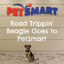 road trippin beagle goes to petsmart