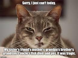 Sarcastic Cat Meme - sarcasm cat tragic imgflip