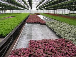 hydroponic how to growing outside your comfort zone commercial