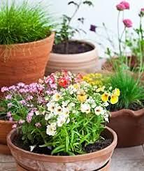 topfpflanzen balkon nadu balkon topfpflanzen 210x250 jpg