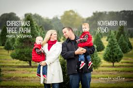 christmas tree farm mini sessions amanda walton photography