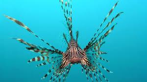 water tag wallpapers sealife fishes water underwater ocean sea