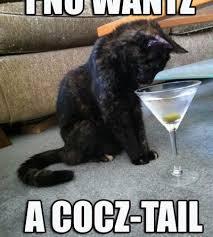 Drunk Cat Meme - cat alcohol meme tv food and drink
