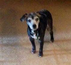 Dogs For The Blind Adoption Dogs Blind Dog Rescue Alliance Philadelphia Pa Kadir Blind Dod