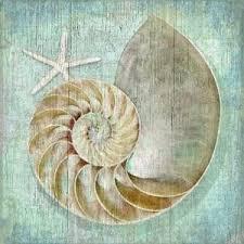 nautilus shell coastal artwork wood print