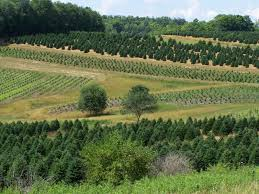 forest view evergreen tree farms about us