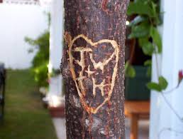 Initials Carved In Tree Pando Leaveon Is Like Carving Your Digital Initials Everywhere