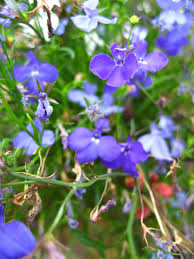 Types Of Planting Flowers - spiller plant types and what they do