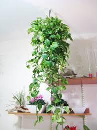 alluring decorating gardening design inspiration containing