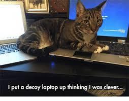 Cat Laptop Meme - i put a decoy laptop up thinking i was clever ups meme on me me