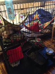 Large Ferret Cage Misbehaving U2013 Manitoba Ferret Association