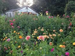 White Flower Farm Coupon Code - debra prinzing slow flowers podcast