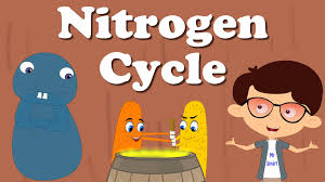 nitrogen cycle youtube