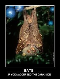 Bat Meme - bat know your meme