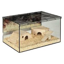 new pet terrarium turtle plant plants insect reptile hamster cage