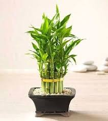 indoor plants india plants problem snap design green india pinterest plants