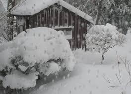 winter in kathy u0027s garden in massachusetts fine gardening