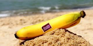 cuisiner des bananes cuisiner des bananes plantain en pratique