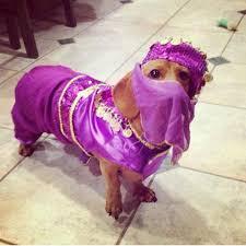 Dog Halloween Costumes Weenie Genie Dog Halloween Costume Dog Halloween