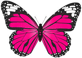 pink butterfly png transparent clip image gallery