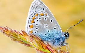 33 soaring butterfly wallpapers you can t resist naldz graphics