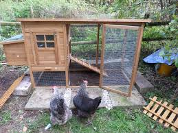 backyard chicken coops for sale online the smart chicken coop