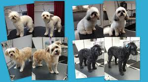 dog grooming services in la crosse wi wags u0026 whiskers