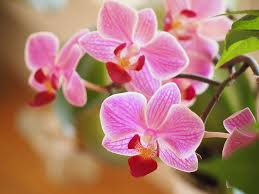 orchids flowers orchids flowers plants free photo on pixabay