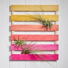 diy air plant wall hanging fiftyflowers the blog