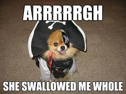 Sexually Inappropriate Memes - inappropriate sexual innuendo dog that talks and dresses like a