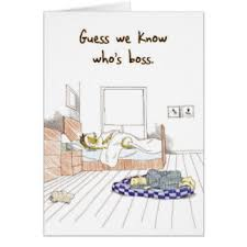 bossy greeting cards zazzle