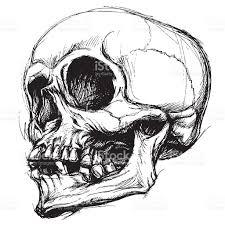 Halloween Skull Drawings Skull Drawing Line Work Vector Stock Vector Art 481401058 Istock