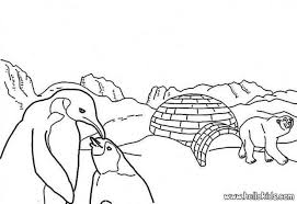 polar bear printable coloring pages hellokids