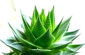 plantes dépolluantes chambre à coucher plante chambre plantes depolluantes propriactacs dacpolluantes c est