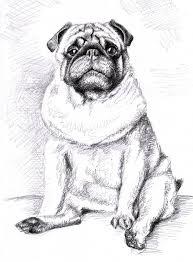 saatchi art the pug drawing by nicole zeug