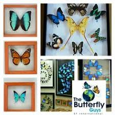 ef international the butterfly guys thebutterflyguys com the