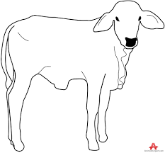 animals clipart of bull clipart with the keywords bull