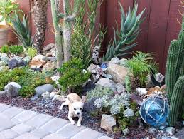 drought friendly landscaping perfect bay area homeowner fined for