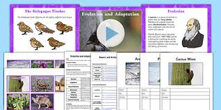 evolution and adaptation year 6 task setter powerpoint