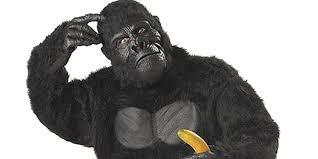 Gorilla Halloween Costume Harambe Halloween Costume 60 Daily Dot
