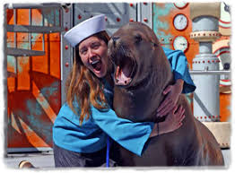 6b7f15b40227495a96ab3ac3b9969dec pic show sea lion laugh png