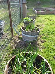 winter veggies a plenty as i visit a california garden u0026 ranch