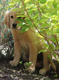 raising puppies to be brave the top 10 ways to create confident