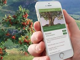 identify trees with our tree id app woodland trust