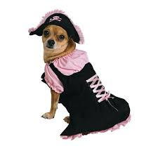 Small Dog Halloween Costumes 25 Small Dog Costumes Ideas Wiener Dogs