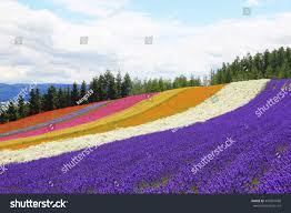 landscape flower garden hokkaido japan stock photo 445991680