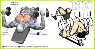 decline bench press muscles the decline dumbbell bench press gym workout chart pinterest