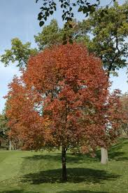 best 25 ash tree ideas on pinterest trees tree identification