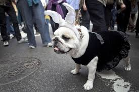 halloween costumes for dogs the cutest puppy costumes of 2011